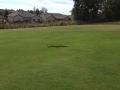 Rattlesnake at Fairways of Canton